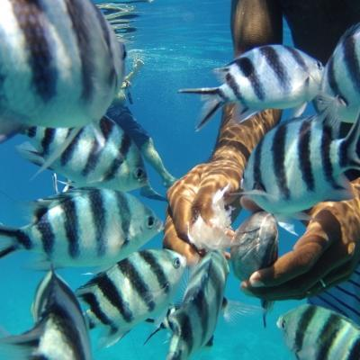 Projects Abroad volunteers take a break to snorkel and feed the fish during their Fiji volunteer programmes.